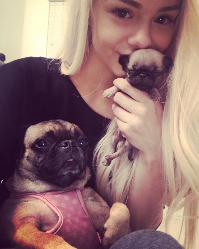 Эльза и щенки